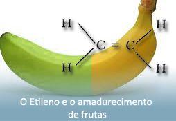 Monitoramento de etileno e CO2 em salas de amadurecimento de frutas